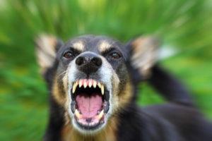 Dog Bite Attorney